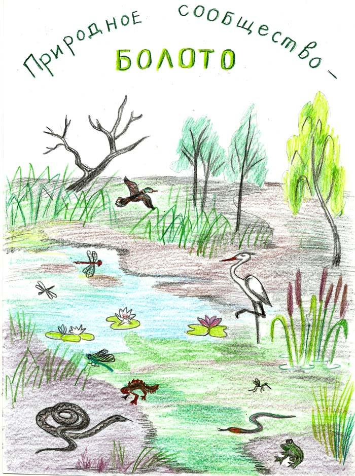 природное сообщество болото