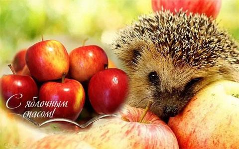 Яблочный Спас милые открытки